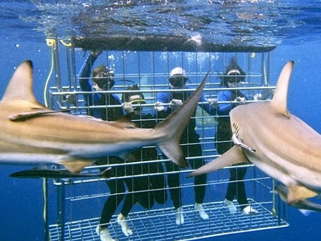Shark Cage Diving Photos