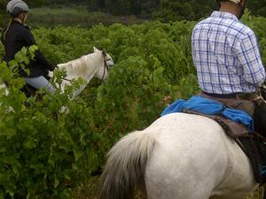 Exclusive Horseback Winelands Tour Fotos