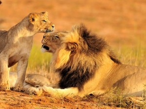 4 Days Ruaha National Park Safari