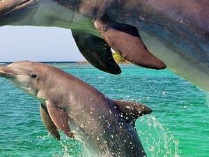 Dolphin Watching and Arrábida Natural Park Tour Photos