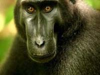 Tangkoko Nature Reserve Tour