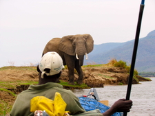 Elephant While Canoeing1