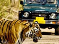 Wlidlife Tour Package of Rajasthan