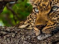 Budget Kruger Park Safari