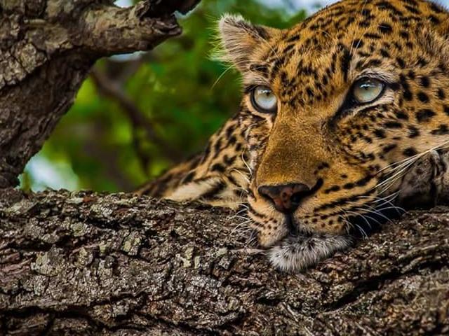 Budget Kruger Park Safari Photos