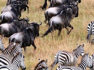 Classic Tour Tanzania Photos
