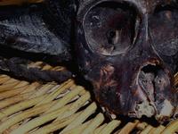 Burmese Monkey Head