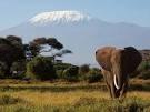 Elephant In Kilimanjaro National Park