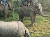 Chitwannationalpark