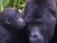 8 Days Primate Safari