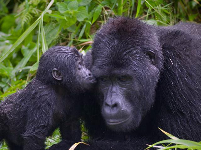8 Days Primate Safari Photos