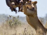 Easter Special Masai Mara Safari