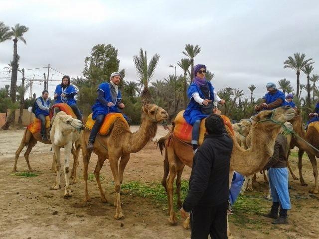 Marrakech Half Day Camel Ride in Palm Grove Photos