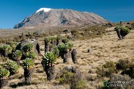 Kilimanjaro Marangu Route Photos