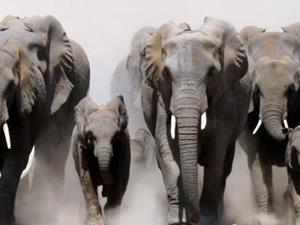 Kenya and Tanzania Safari Adventure Photos