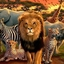 Dima Africa Safaris