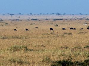 Maasai Mara Photos