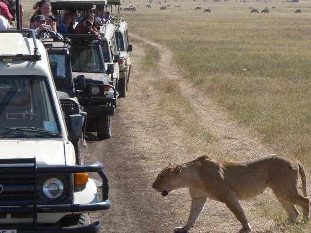 Special Deal on Lake Manyara, Serengeti Plains, Ngorongoro Crater Photos