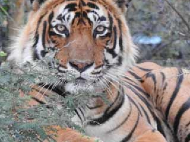 Golden Triangle with Ranthambore Wildlife Photos