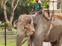 Delights of Chitwan Tour Package