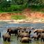 Ceylon Island Travel Discover Sri Lanka Tour Pinnawala