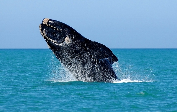 Hermanus Whale Coast - Wine Tour Photos