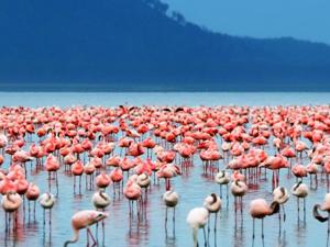 Lake Nakuru Express Fotos