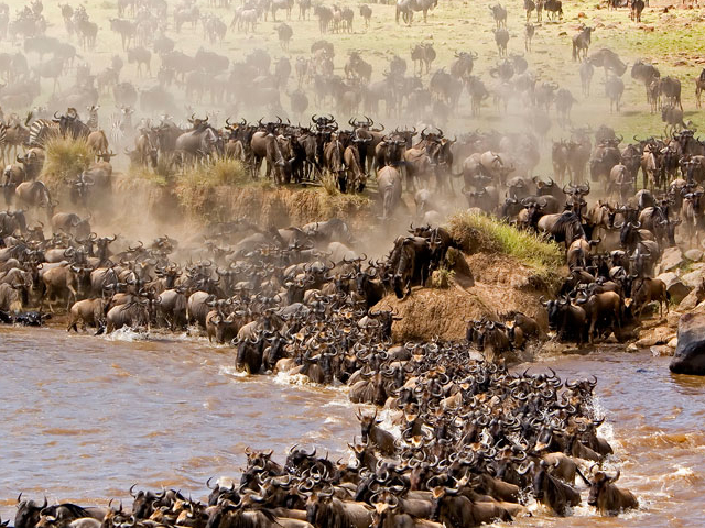 Masai Mara Holiday Photos