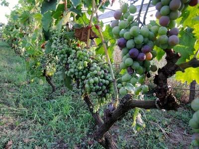 Wine Routs Photos