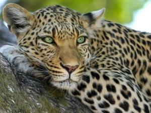 Amboseli Safaris Photos