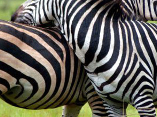 Budget Safari to Kidepo Valley National Park Photos