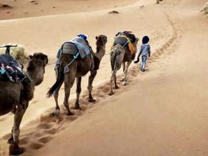 Morocco Sahara Desert Camel Trekking and Ridding Photos