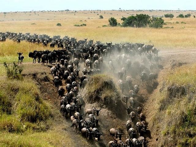 Best Deals for Maasai Mara Photos