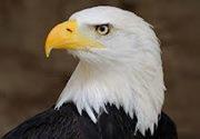 Free Falcon