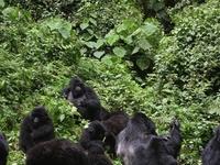5-Day Gorillas Uganda - Rwanda Safari Package