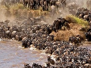 Maasai Mara Tented Safari Photos