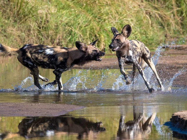 7 Days - Exciting Affordable Zambia Safari Photos