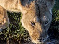 Maasai Mara Photo Safari