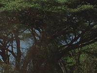 Amboseli National Reserve