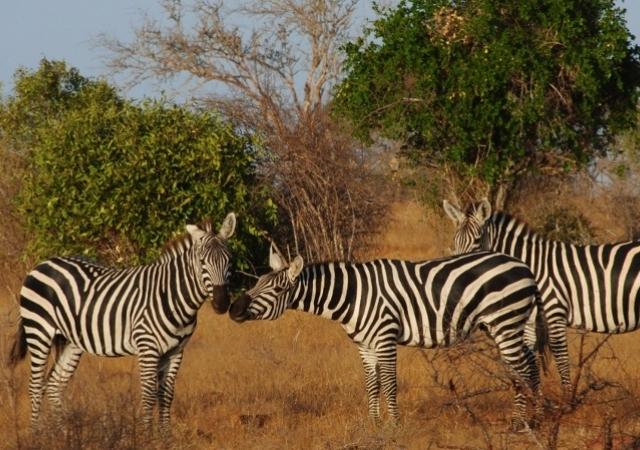 Tsavo East National Park Safari Photos