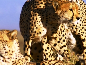 Full Day Cape Town Safari Tour Photos