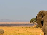 Lake Manyara - Tarangire - Ngorongoro Tour