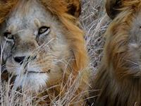 Serengeti & Ngorongoro Tour