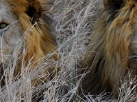 Lake Manyara, Serengeti and Ngorongoro Tour