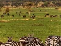 Safari - Lake Manyara, Serengeti and Ngorongoro Crater