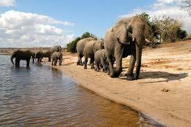 Botswana Exploration Photos