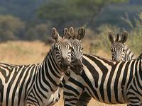 Serengeti Safari Family Holiday
