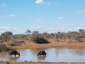 Enjoy Madikwe Safaris Package