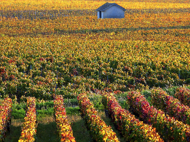 Experience a Unique Gastronomy and Wine Trip to France Photos