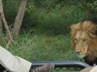 The Kruger National Park Explorer 3 or more days